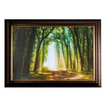 "30""x42"" Sunny Path of Trees Framed Wall Art"