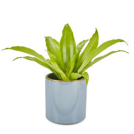 "The Grainhouse™ 5"" Blue Flower Pot view 1"