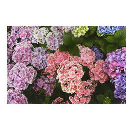 Pink/Purple Lilacs Photograph Canvas Wall Art view 1