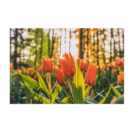 Orange Tulips Photograph Canvas Wall Art view 1