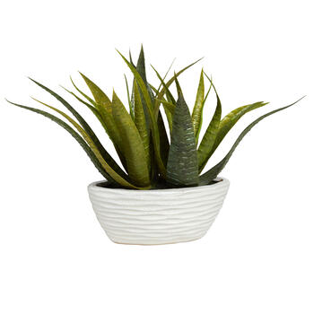 "10"" Succulent Plant in Oval Pot view 1"