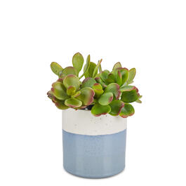 "The Grainhouse™ 5"" White/Blue Flower Pot view 1"