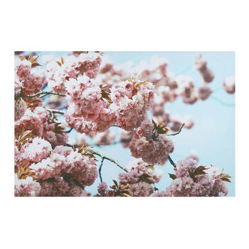 "24""x36"" Cherry Blossom Tree Canvas Wall Art view 1"