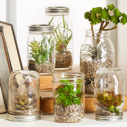 Think terrarium