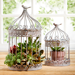 Petal and Stone™ Birdcages