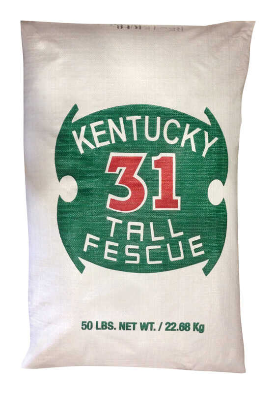 Barenbrug  Kentucky 31  Tall Fescue  Grass Seed  50 lb.