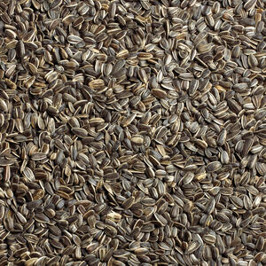 Ace  Assorted Species  Striped Sunflower  Striped Sunflower Seed  5 lb.