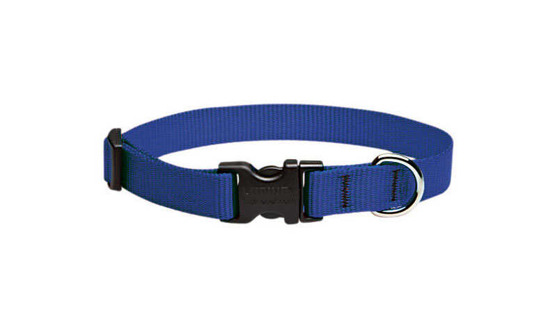 Lupine Pet  Basic Solids  Blue  Blue  Nylon  Dog  Adjustable Collar