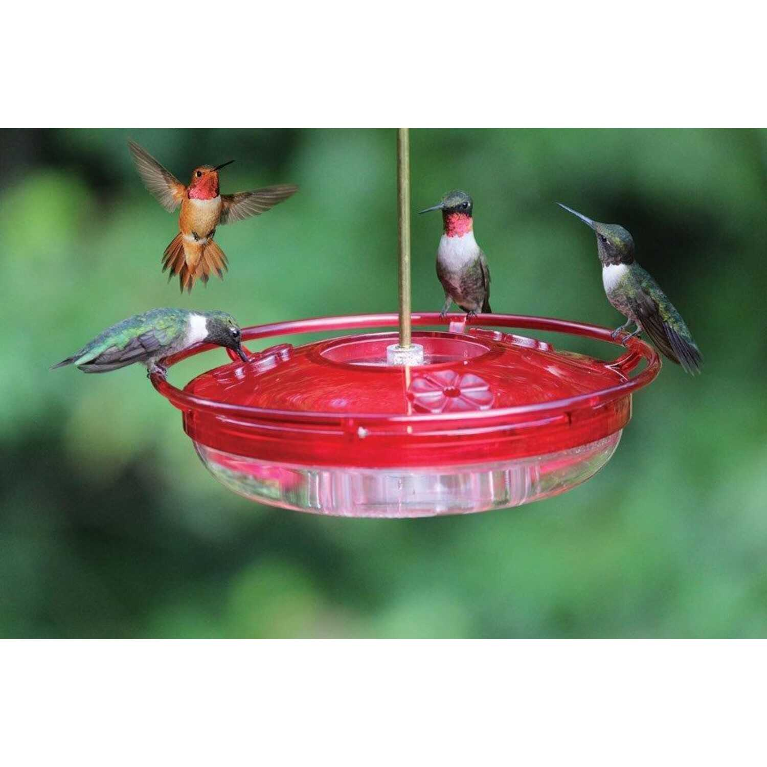Cole's  Hummer High Rise  Hummingbird  8  Polycarbonate  Bird Feeder  3 ports