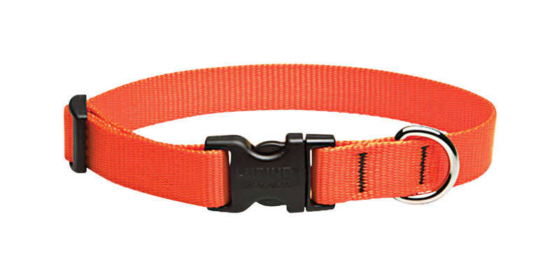 Lupine Pet  Basic Solids  Blaze Orange  Nylon  Dog  Adjustable Collar