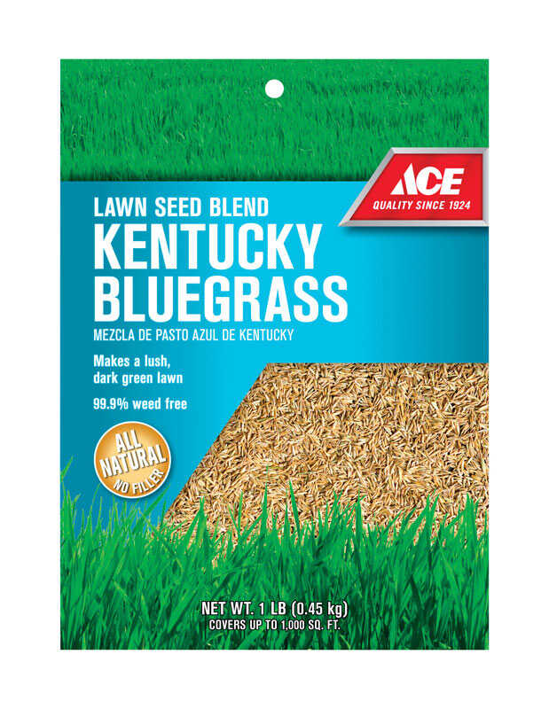 Ace  Kentucky Bluegrass  Lawn Seed Blend  1 lb.