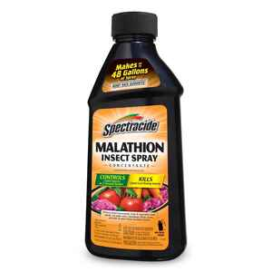 Spectracide  Malathion  Insect Killer  16 oz.