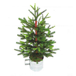 Holiday Bright Lights  <4 ft. Table Top Christmas Spruce  Artificial Tree