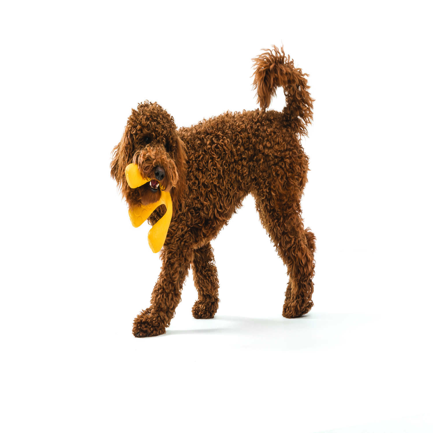 West Paw  Zogoflex Air  Yellow  Synthetic Rubber  Dog Tug Toy  Small  Wox Tri-Handle Tug
