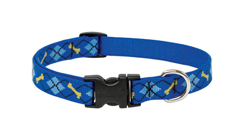 Lupine Pet  Original Designs  Dapper Dog  Nylon  Dog  Adjustable Collar