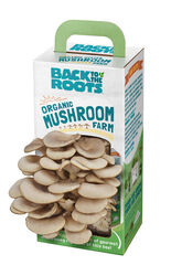 Back to the Roots  Grow Kit  1 pk