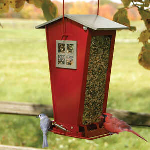 Audubon  Snack Shack  Wild Bird  7 lb. Steel  Squirrel-Resistant  Bird Feeder  2 ports