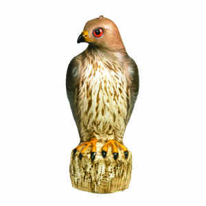 Bird-B-Gone  Bird Deterrent Decoy  For Red Tailed Hawks