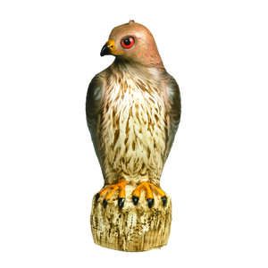 Bird-B-Gone  Bird Deterrent Decoy  For Red Tailed Hawks 1 pk