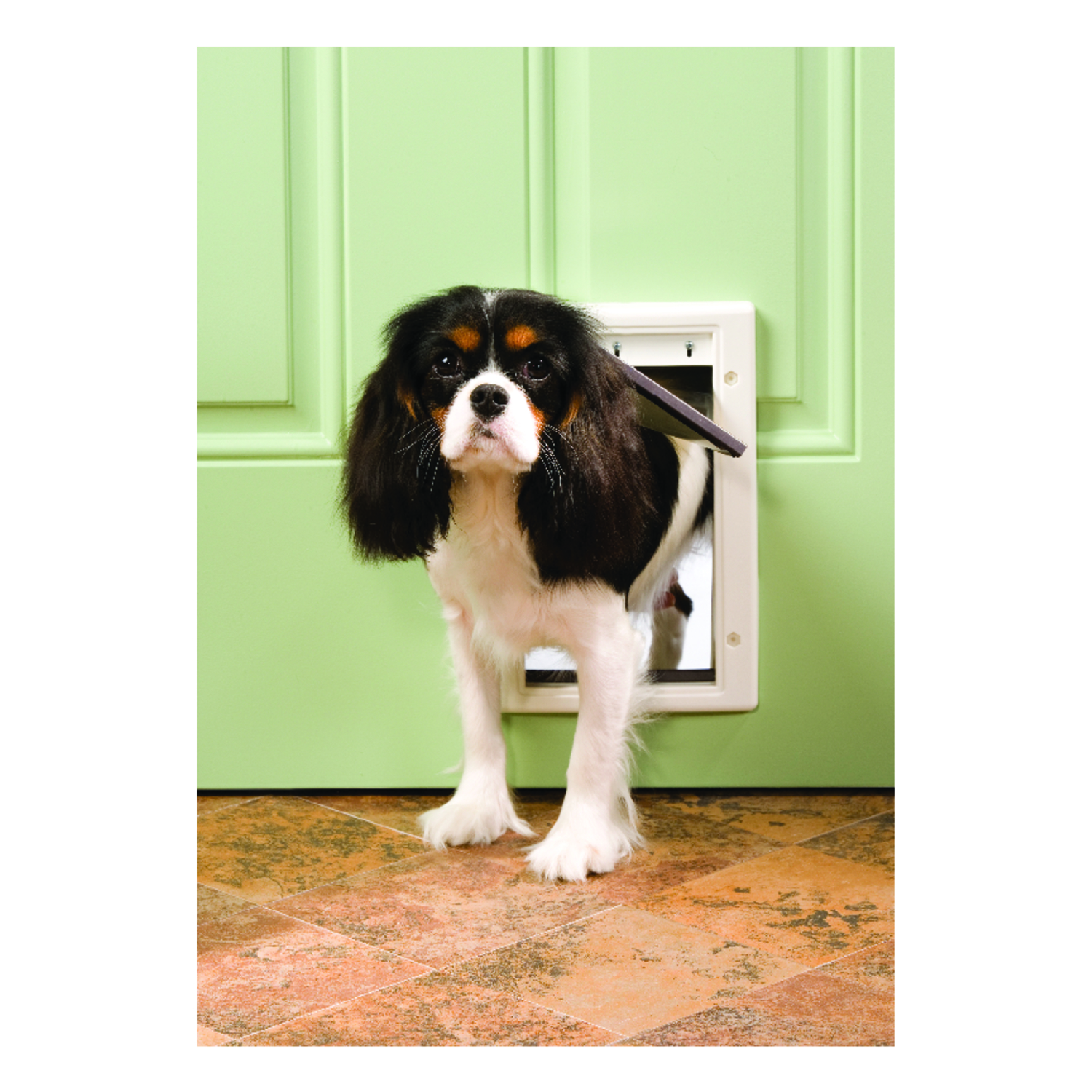 Petsafe Pet Door Small For Pets up to 15 lb. 5-1/8 in. x 7-5/8 in. White Plastic