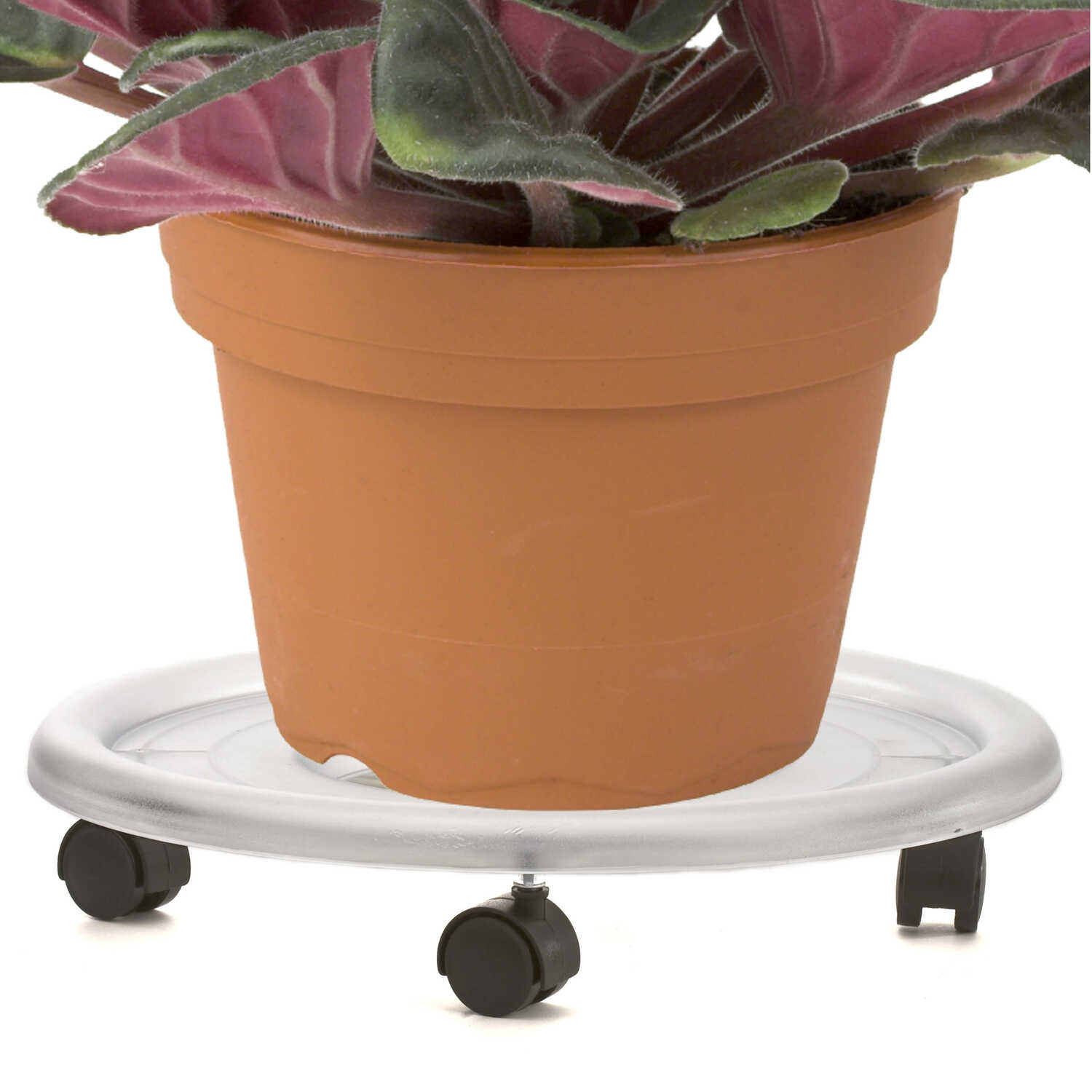 Gardener's Blue Ribbon  3.5 in. H Plastic  Clear  Planter Caddie