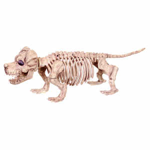 Seasons  Skeleton Puppy Bonez  Halloween Decoration  5-1/2 in. W x 21-3/8 in. L x 6-3/4 in. H 1 pk