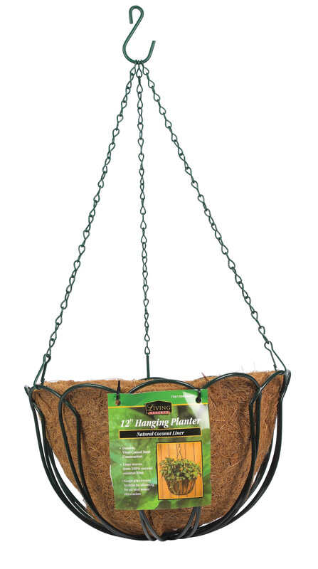 Panacea  Green  Steel  Hanging Basket