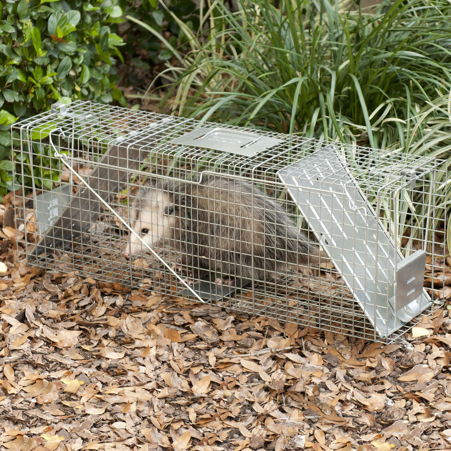 Havahart  Large  Live Catch  Animal Trap  For Raccoons, Raccoons 1 each