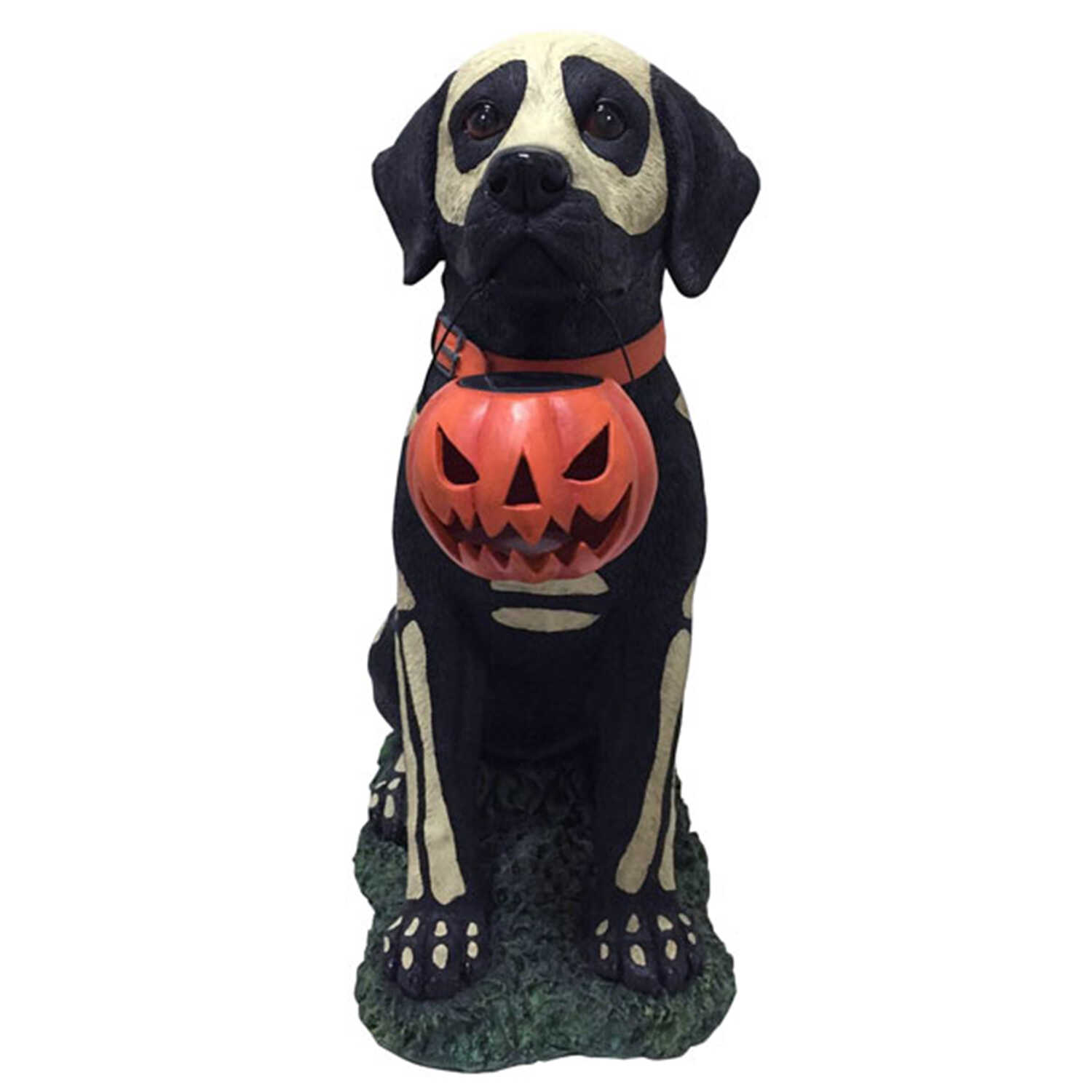 DHI  Painted Skeleton Dog with Pumpkin  10.8 in. W Halloween Decoration