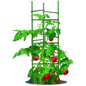 Gardeners Blue Ribbon  60 in. H x 60 in. W Green  Steel  Tomato Cage