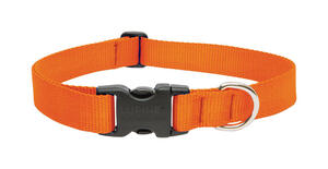 Lupine Pet  Basic Solids  Blaze Orange  Blaze Orange  Nylon  Dog  Adjustable Collar
