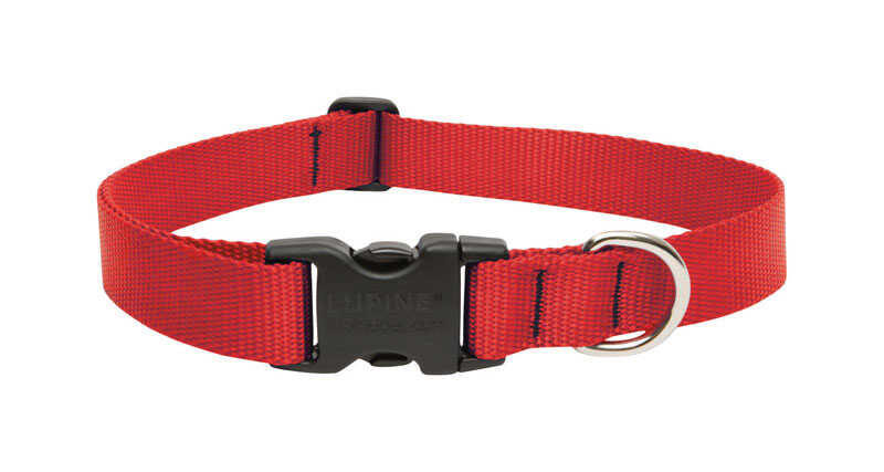 Lupine Pet  Basic Solids  Red  Nylon  Dog  Adjustable Collar