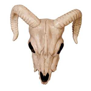 Seasons  Ram Head Skeleton  11.625 in. H x 5.1 in. W x 10.75 in. L 1 pk Halloween Decoration