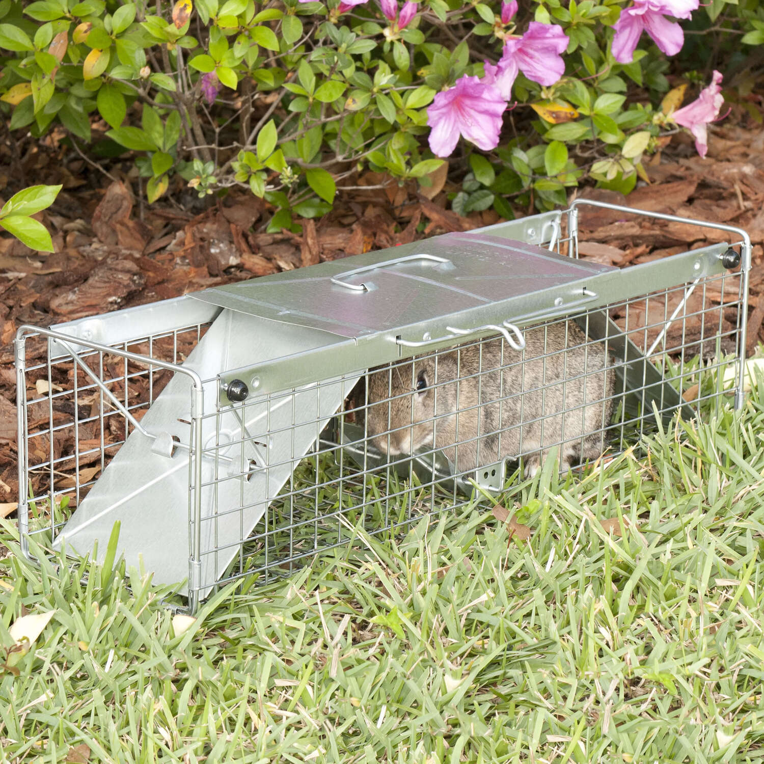 Havahart  Medium  Live Catch  Animal Trap  For Rabbits, Rabbits 1 each