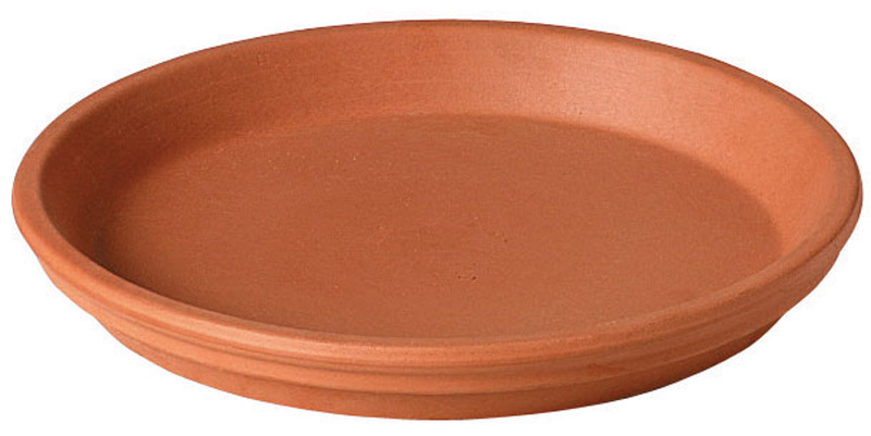 Deroma  1 in. H x 6 in. W x 5 in. L Terracotta  Clay  Traditional  Plant Saucer