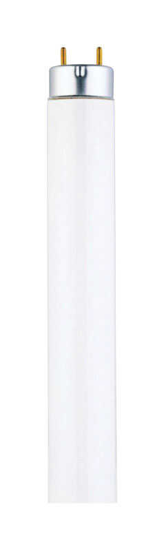Westinghouse  25 watts T8  48 in. L Fluorescent Bulb  Cool White  Linear  2500 lumens 1 pk