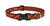 Lupine Pet  Original Designs  Multicolor  Down Under  Nylon  Dog  Adjustable Collar