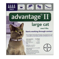 Bayer  Advantage II  Liquid  Cat  Flea Drops  Imidacloprid/Pyriproxyfen  0.108 oz.