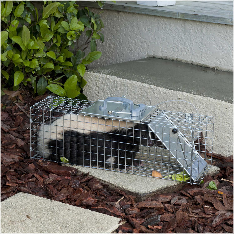 Havahart Live Catch Animal Trap For Rabbits 1 pk - Ace Hardware