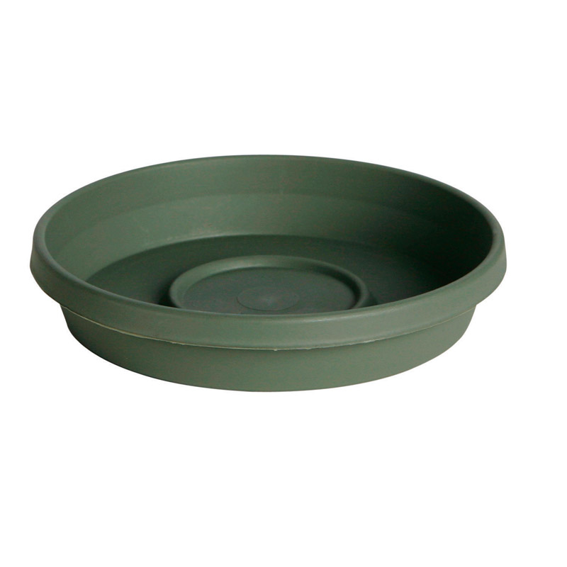 Bloem  Terratray  2.7 in. H x 16 in. W Thyme Green  Resin  Traditional  Tray