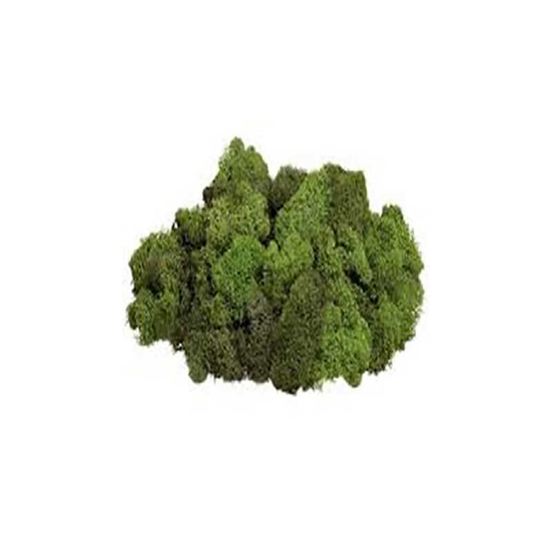 Mosser Lee  Reindeer Moss  Soil Cover  3 oz.