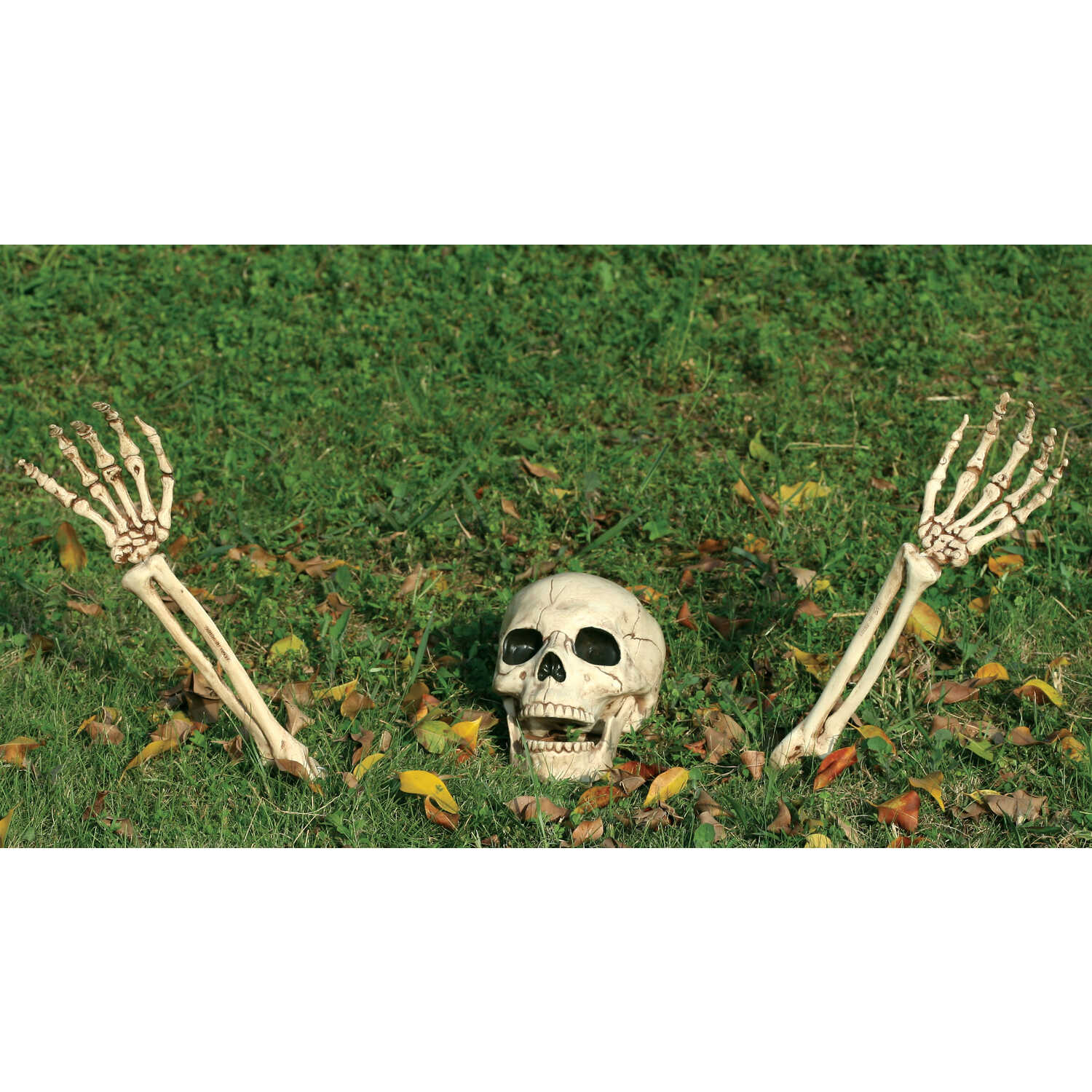 Seasons  Ground Breakers Skull and Arms  Halloween Decoration  14.5 in. H x 5 in. W x 5 in. L 3 pc.