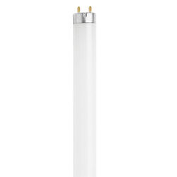 Feit Electric  15 watt T8  18 in. L Fluorescent Bulb  Cool White  Linear  4100 K 1 pk