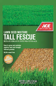 Ace  Tall Fescue  Tall Fescue  Lawn Seed Blend  3 lb.