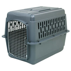 Aspen Pet Plastic Pet Kennel Multicolored 27 in. H x 25 in. W x 36 in. D