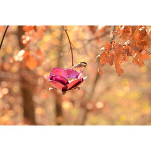 Desert Steel  Crab Apple  Songbird  1-1/2 lb. capacity Steel  Bird Feeder  1 ports