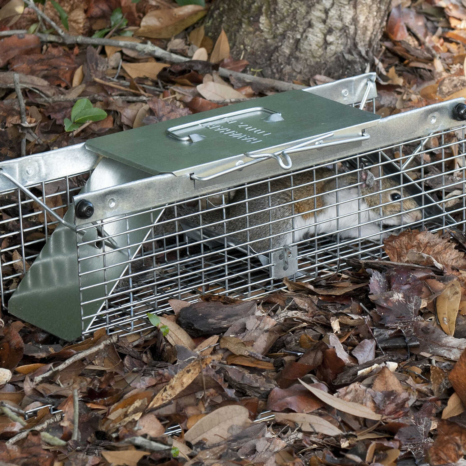 Havahart Live Catch Cage Trap For Chipmunks, Squirrels and