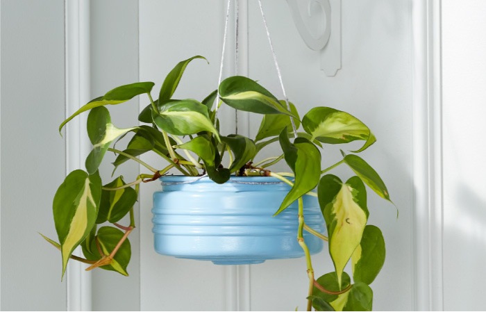 Upcycled Plant Hangers