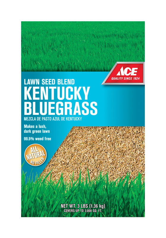 Kentucky Blue Grass