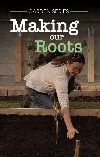 Making Our Roots